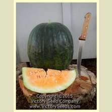 Victory Seeds Marby's Yellow Watermelon