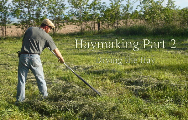The second part of haymaking, (drying the hay) starts after cutting the hay and is just as important as any of the steps in the haymaking process.
